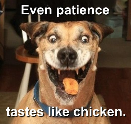 patience in gamers
